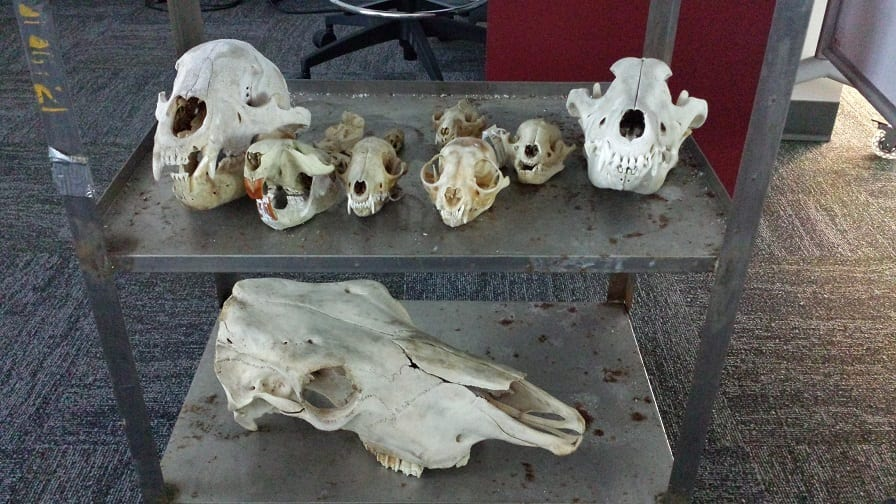 Skulls - 3D Scanning for Research